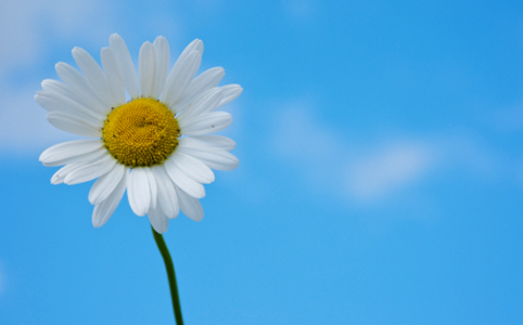 Photo of a flower with sky in the background