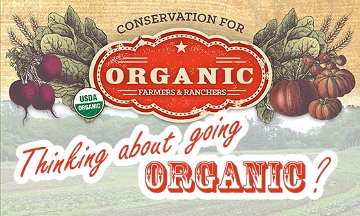 If you are thinking about transitioning to organic agriculture, contact one of our local Service Centers to find out more...