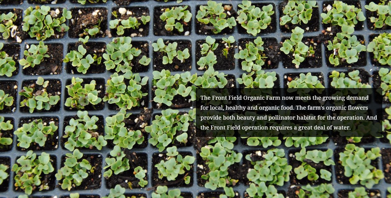 The Front Field Organic Farm now meets the growing demand for local, healthy and organic food.