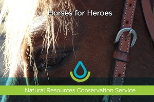 Horses for Heroes Thumbnail