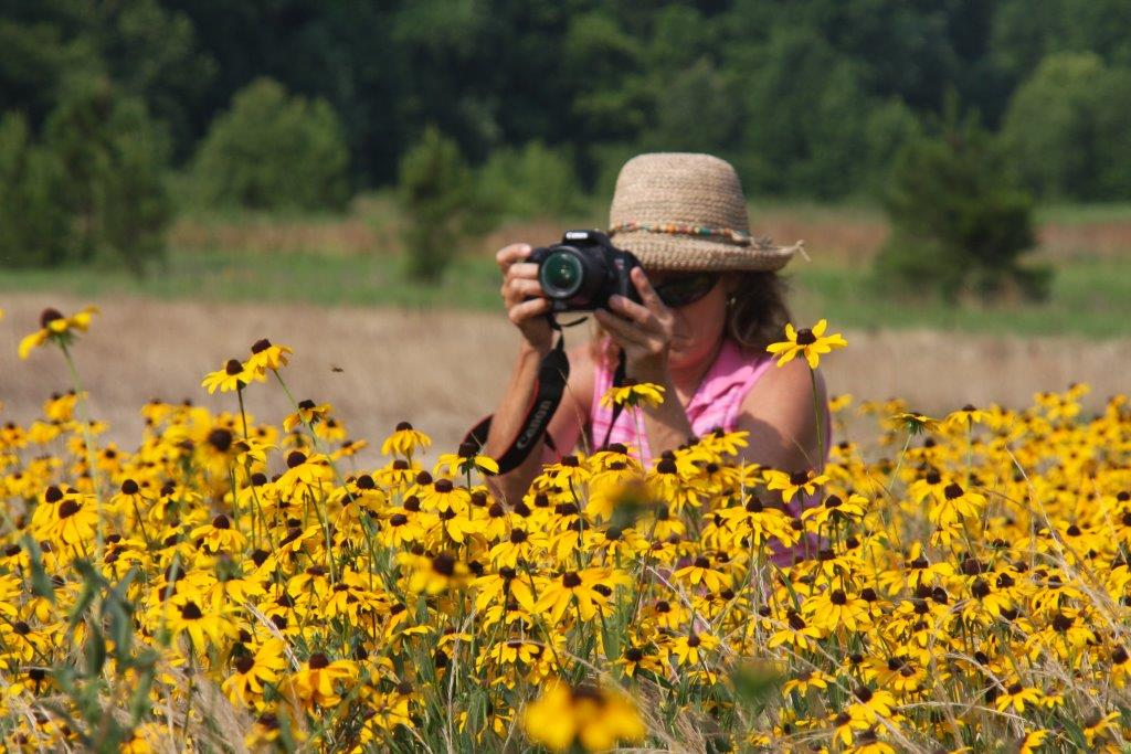 Woman taking a photo in a field of Black-eyed Susans in northern Mississippi. Photo: Justin Fritscher.