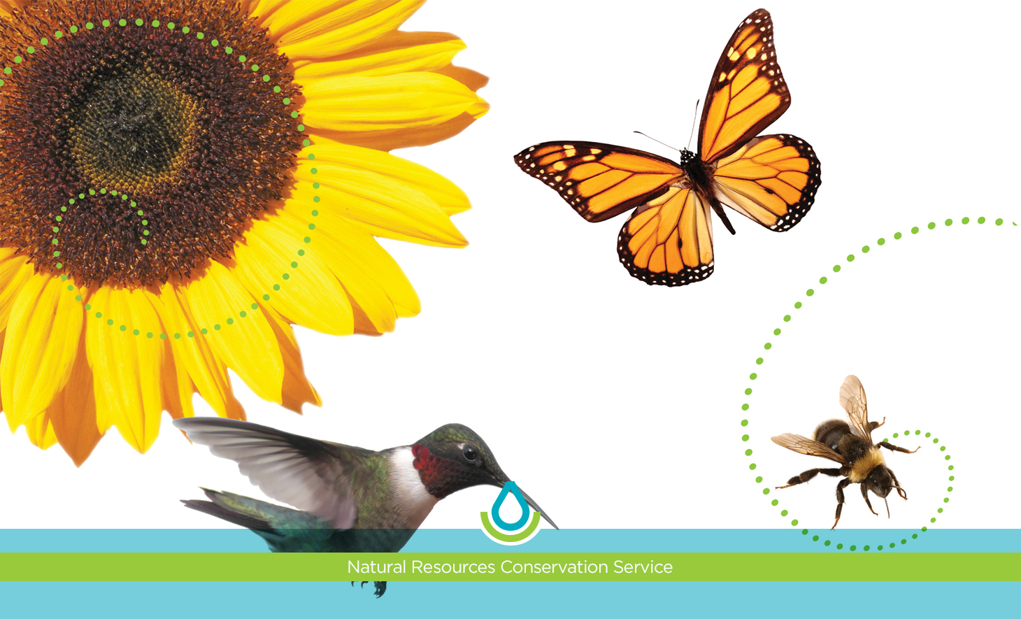 Pollinator Story Map image
