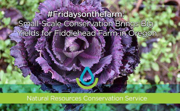 #Fridaysonthefarm: Small Scale Conservation Brings Big Yields Web Header