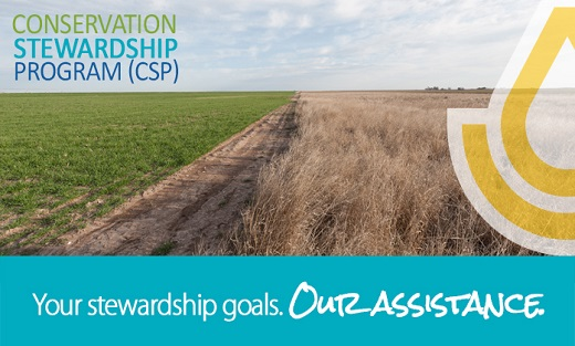 Conservation Stewardship Program (CSP)