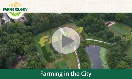 farming in the city HF