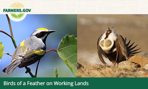 Birds of a Feather on Working Lands Web