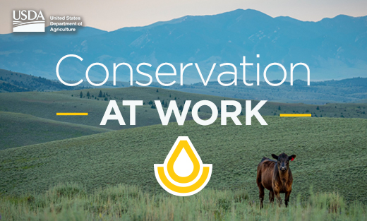 Conservation at Work