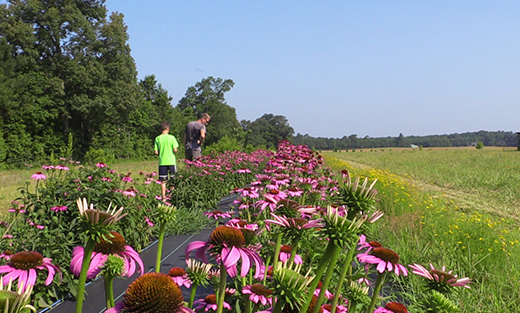 Delaware farmer and NRCS employee turned unused grassy areas of his farm into pollinator habitat.