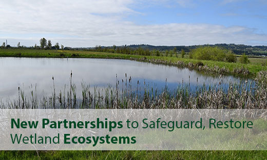 USDA Seeks New Partnerships to Safeguard, Restore Wetland Ecosystems.