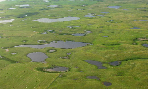 Webinar: Quantifying Conservation Effects on Multiple Wetland Ecosystem Services, Oct. 22, 3 p.m. ET