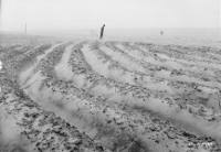 A man walking into the wind among  crop rows filled by sand
