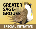 Greater Sage-grouse Special Initiative