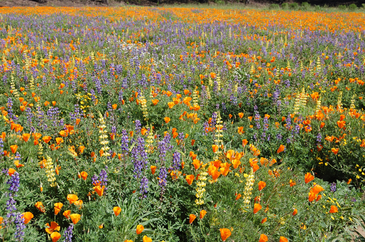 Pollinator meadow at the Lockeford Plant Materials Center, Lockeford, California