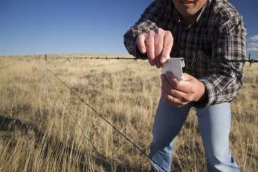 Marking fences to make them more visible.